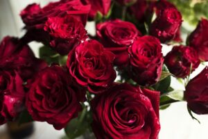 Fresh Red Roses Flowers
