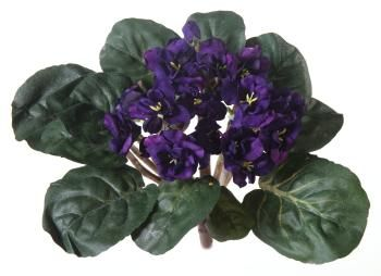 Silk African Violet Plant A2670 Flower Delivery Www 416 Flowers